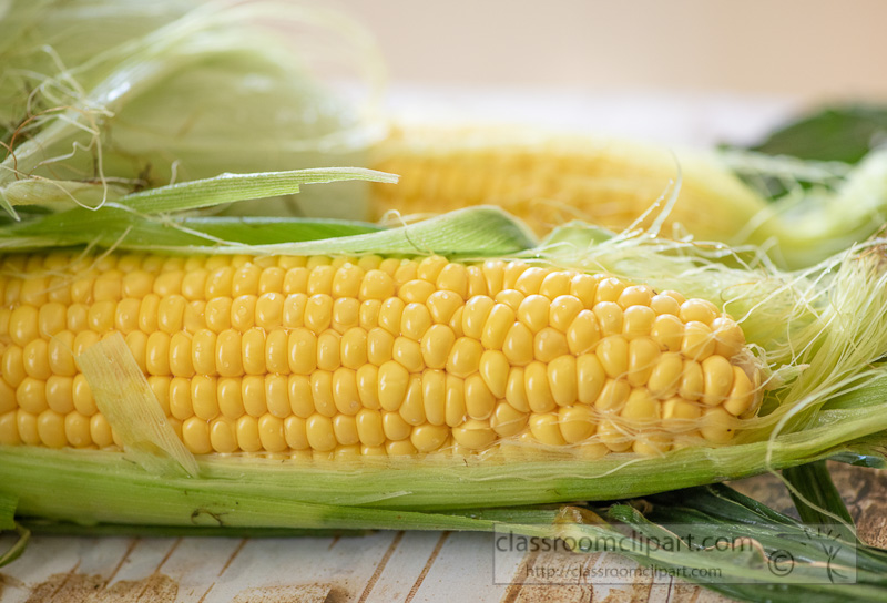 preparing-fresh-yellow-corn-to-cook-photo-8509959.jpg