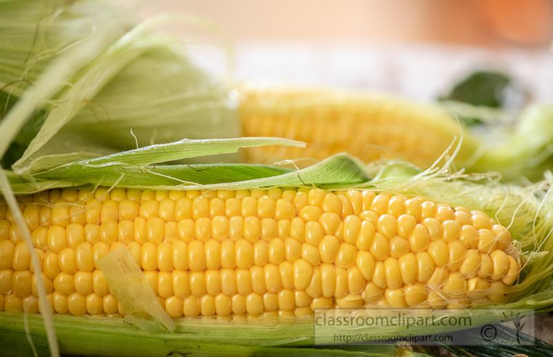 preparing-fresh-yellow-corn-to-cook-photo-8509960.jpg