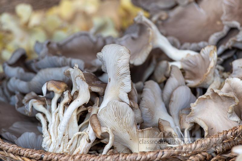 baskets-of-fresh-mushrooms-at-a-farmers-market-8500243.jpg