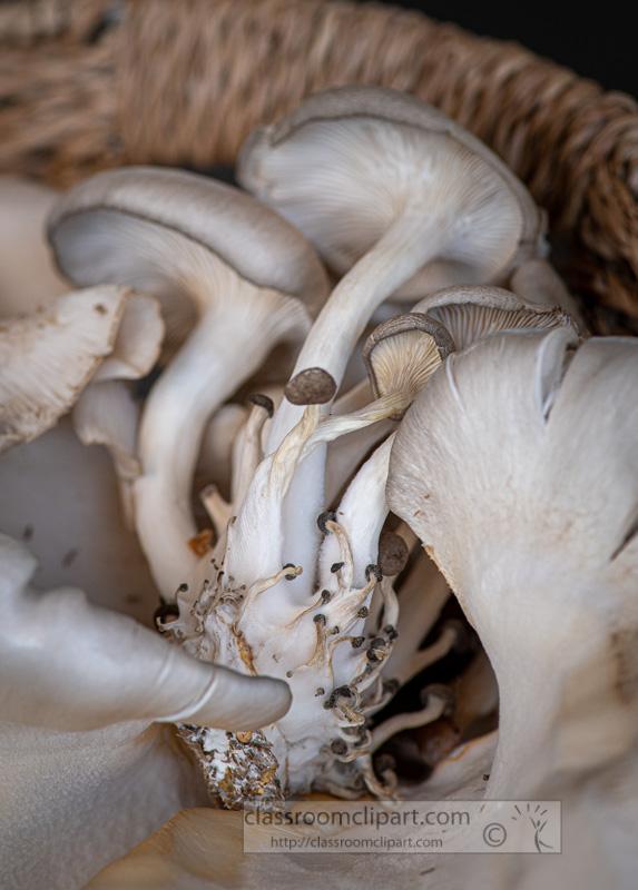 mushrooms-in-basket-side-view-00244.jpg