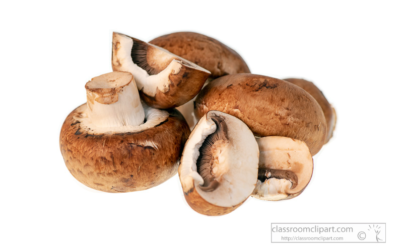 photo-image-portebello-mushroom-white-background-.jpg