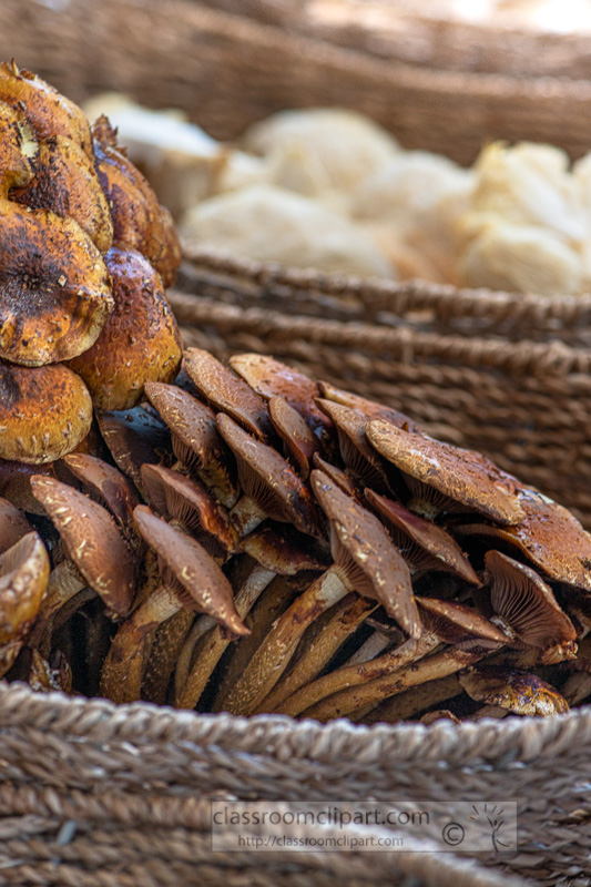 several-baskets-full-of-fresh-mushrooms-00253.jpg