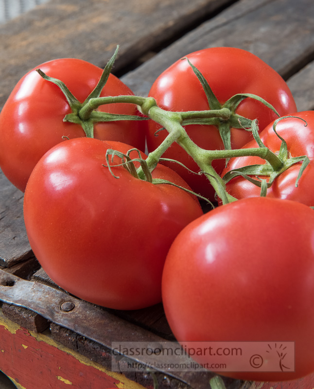 close-up-fresh-tomatoes-on-the-vine-photo-image-8254.jpg