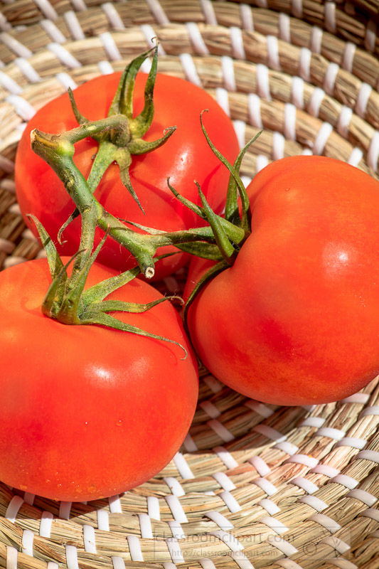 close-up-three-fresh-tomatoes-with-stems-in-weaved-basket-photo-image-6047.jpg