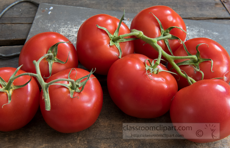 picked-fresh-tomatoes-on-the-vine-photo-image-8271.jpg