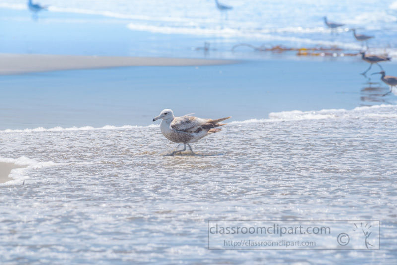 sea-bird-at-shoreline-morro-bay-6903.jpg