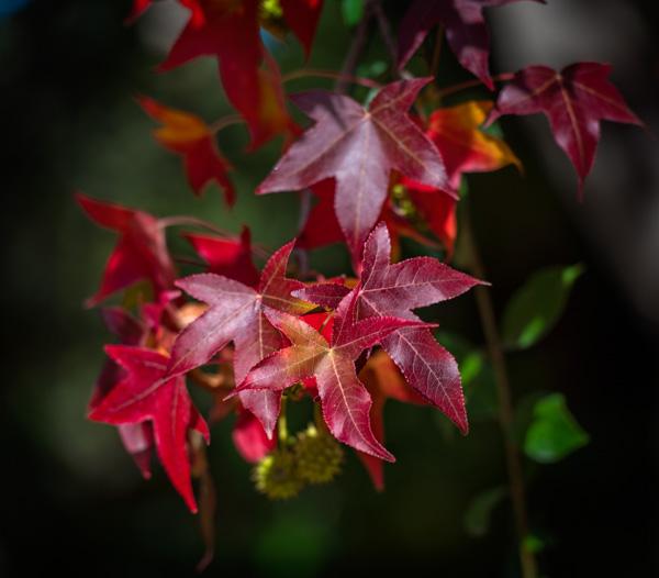 bright-red-fall-foliage-photo_8304-Edit.jpg