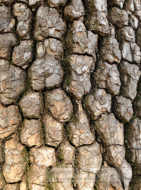 close-up-tree-bark.jpg