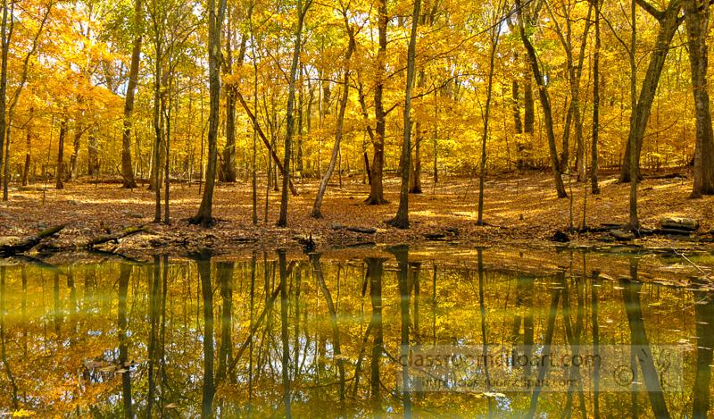 fall-follage-reflecting-in-pond.jpg