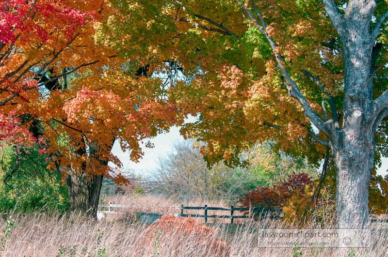 fall_leaves_0804.jpg