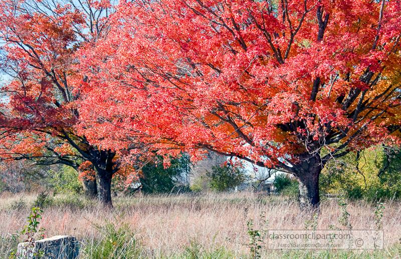 fall_leaves_0805.jpg
