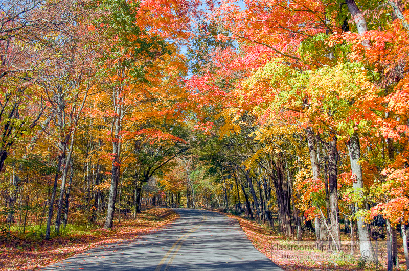 fall_leaves_0811.jpg