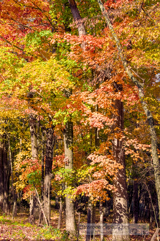 fall_leaves_0813.jpg