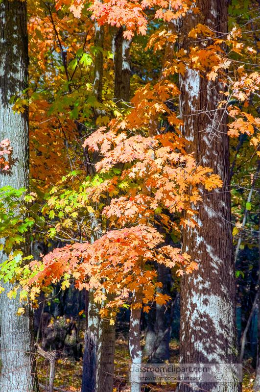 fall_leaves_0814.jpg