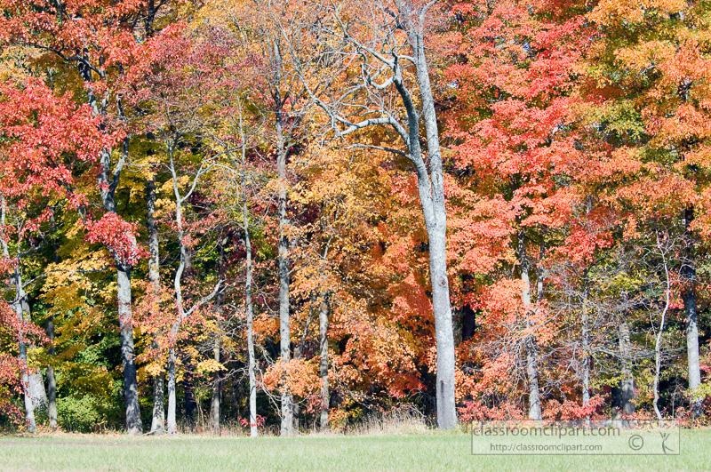 fall_leaves_0817.jpg