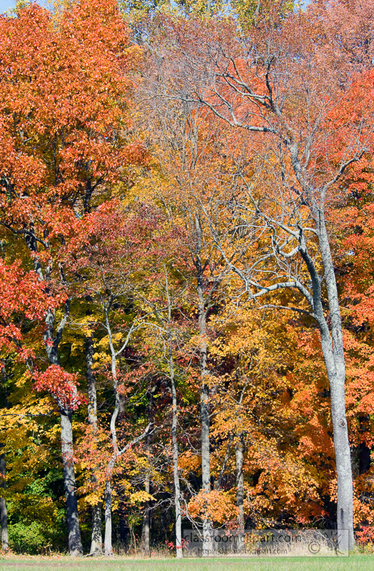 fall_leaves_0818.jpg