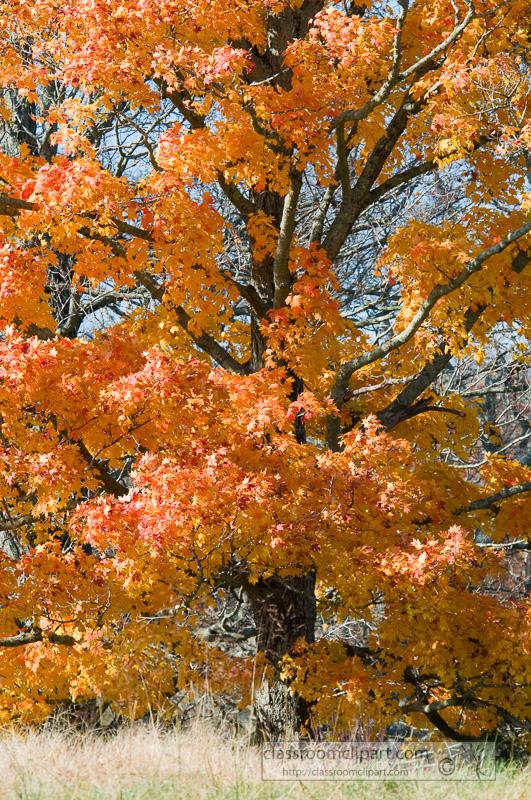 fall_leaves_0822.jpg