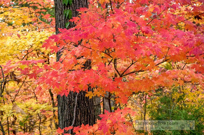 fall_leaves_0832.jpg