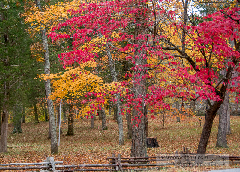 fall_leaves_0833.jpg