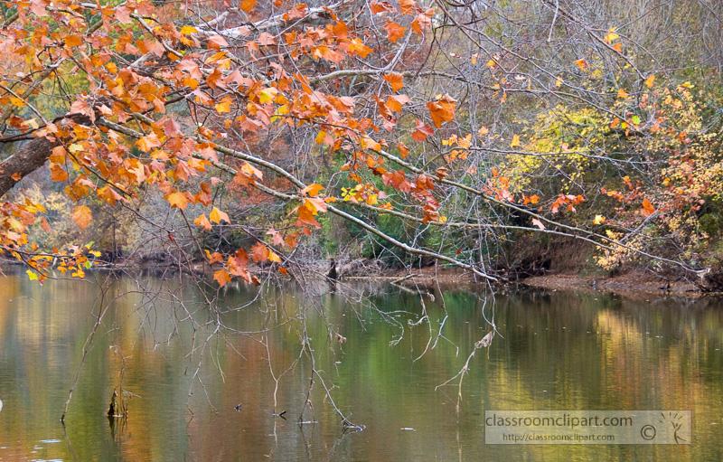fall_leaves_0837.jpg