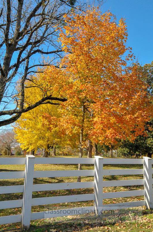 white-fence-falll-folliage-tree.jpg