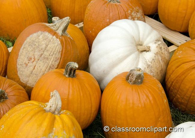 colorful_pumpkins_4968c.jpg