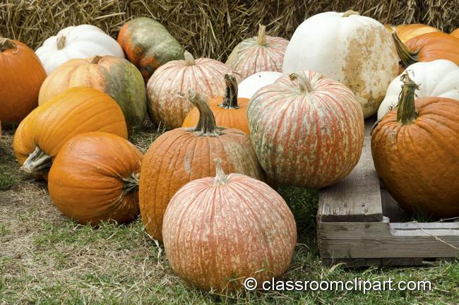different_shaped_pumpkins_5018.jpg
