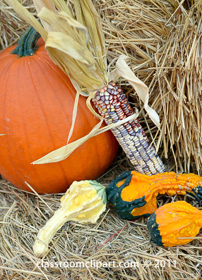 indian_corn_with_gourds_SM.jpg