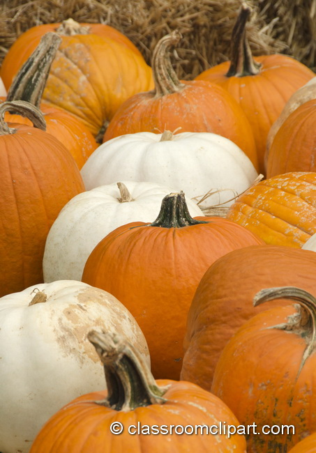 orange_white_pumpkin_4987.jpg