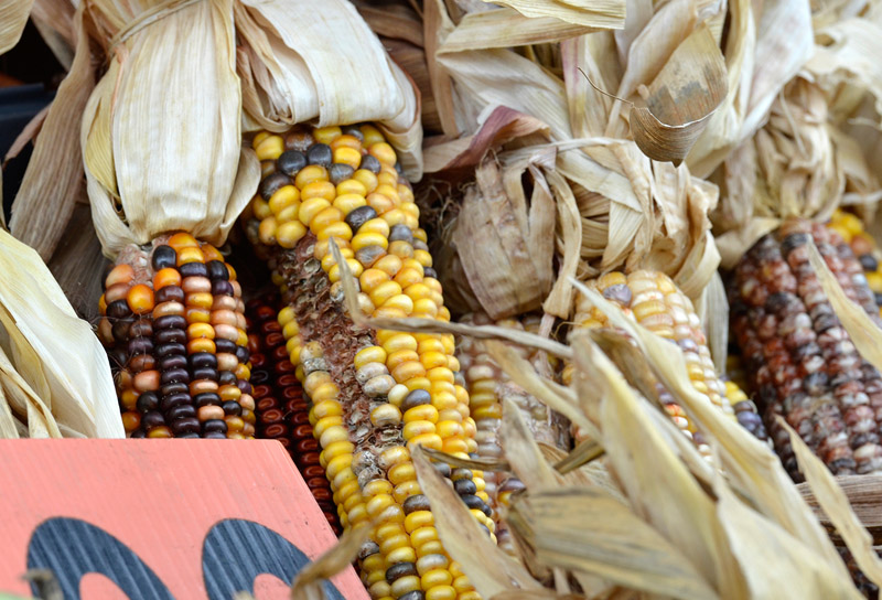 picture-fall-indian-corn-69A.jpg