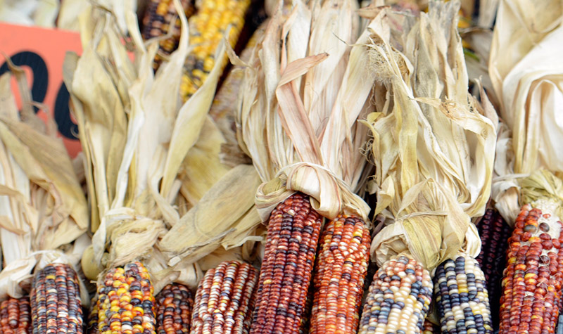 picture-indian-corn-at-market-177AA.jpg