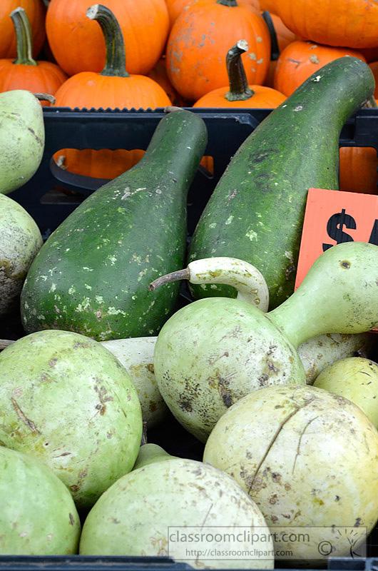 pictures-green-gourds-pumpkins-71A.jpg