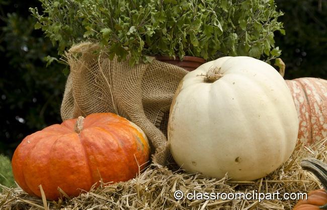 pumpkin_bale_5008.jpg