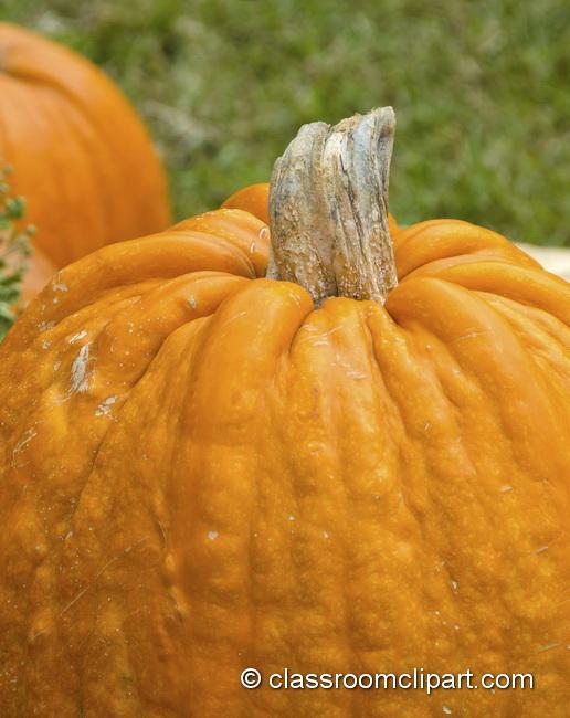 pumpkin_closeup_4992A.jpg