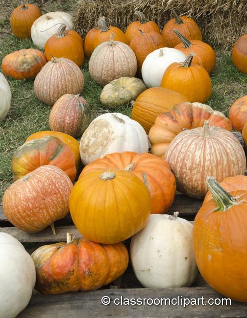 pumpkin_patch_5014.jpg