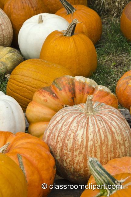 pumpkin_patch_5016.jpg