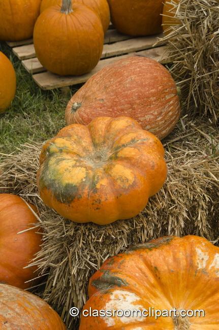 pumpkin_straw_4985.jpg