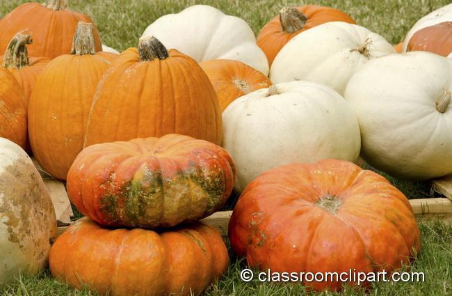pumpkins_grass_4970.jpg