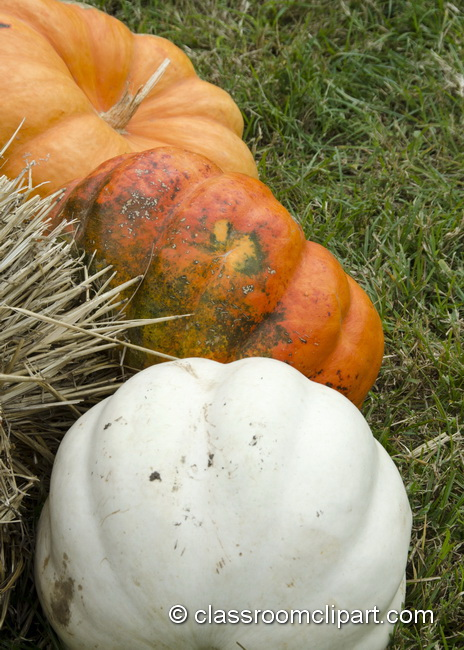 pumpkins_on_grass.jpg