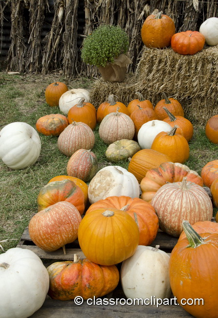 pumpkins_scattered_5023.jpg