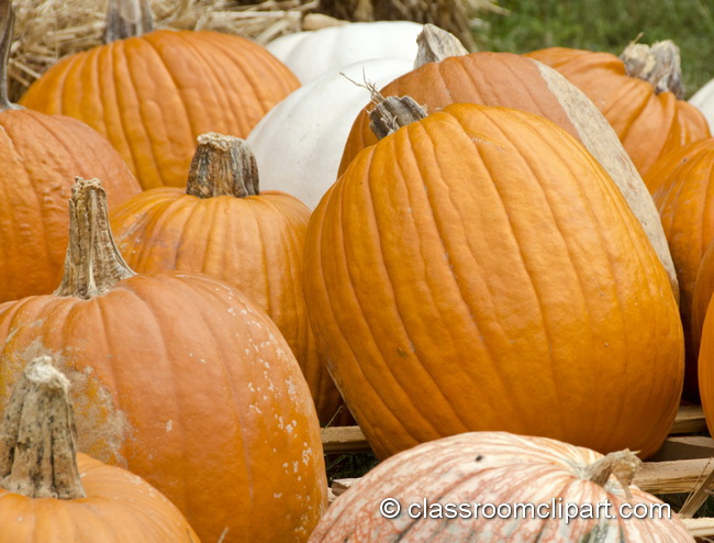 pumpkins_side_view_4980B.jpg