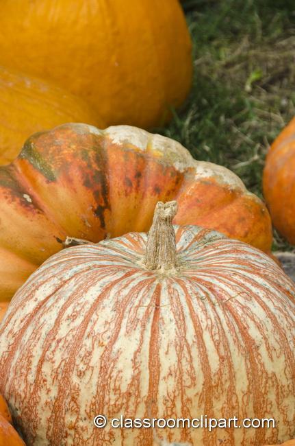stripped_pumpkin_5017.jpg