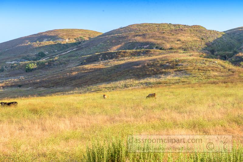 rolling-hills-cows-grazing-6658.jpg