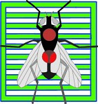 insect_icons_6.jpg