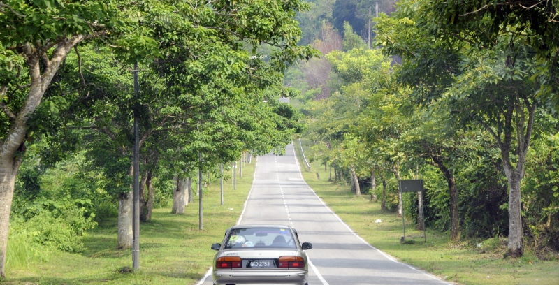 car-driving-on-road-in-borneo.jpg