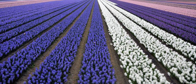 holland_plants.jpg