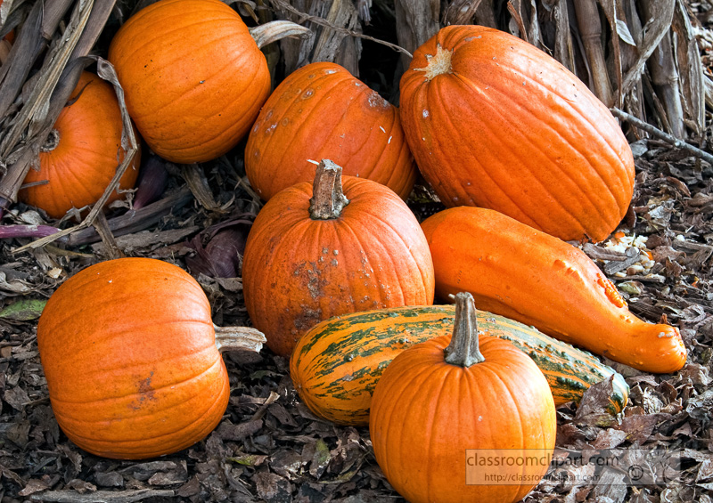 fall-pumpkins-10_09_40.jpg