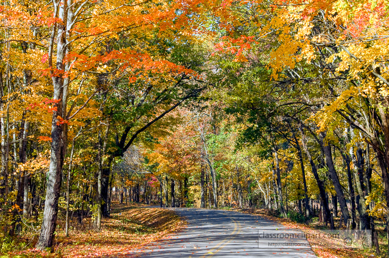 fall_leaves_0812.jpg