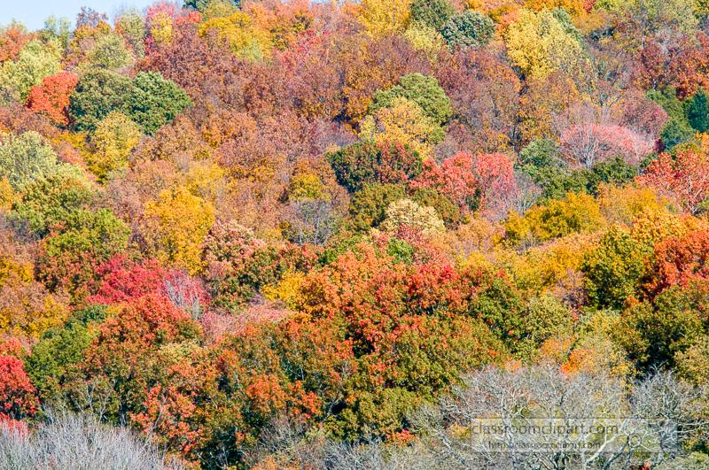 fall_leaves_0816_1.jpg