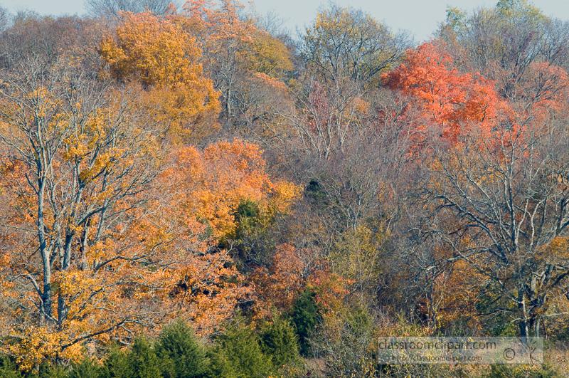 fall_leaves_0823.jpg